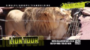 lion tour ACTIVITIES